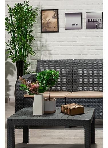 Sandalie Olimpos 2+1+1+s Balkon&teras Bahçe Mobilyası / Antrasit  Antrasit